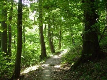Fotografia z prírody